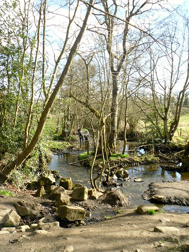 park mill stream and  horse