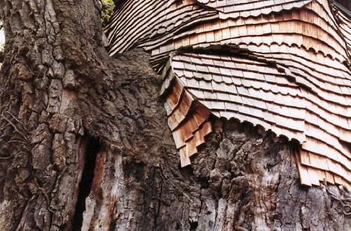 oak-chapel4