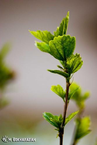 green nature spring bloom بهار mostafa سبز مصطفی شکوفه بخارائیان bokharaeian