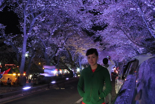 Gyeongju Night Blossoms