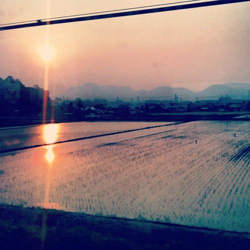 Sunset over rice plantation #jpntravel #japan