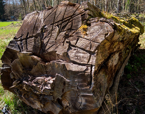 wood tree nature forest spring pvanhala