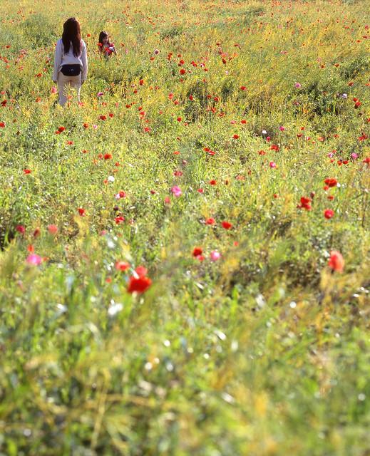 花畑の記念撮影