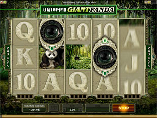 Untamed Giant Panda slot game online review