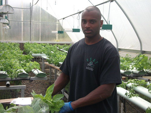: A veteran and participant of the Veterans Sustainable Agriculture Training program handles living basil at an organic hydroponic farm, which grows plants in water as opposed to soil. The program, started by decorated Marine sergeant Colin Archipley, passes on agricultural knowledge to veterans to not only provide healing through farming but also to support them in starting their own agricultural enterprises.