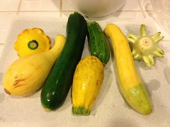 banana(0.0), plant(0.0), fruit(0.0), vegetable(1.0), summer squash(1.0), yellow(1.0), produce(1.0), food(1.0), winter squash(1.0), cucurbita(1.0), gourd(1.0),