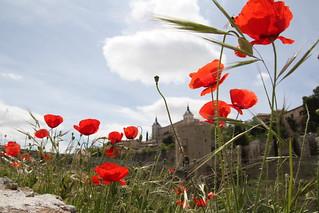 Entre las amapolas se ve el Alcázar