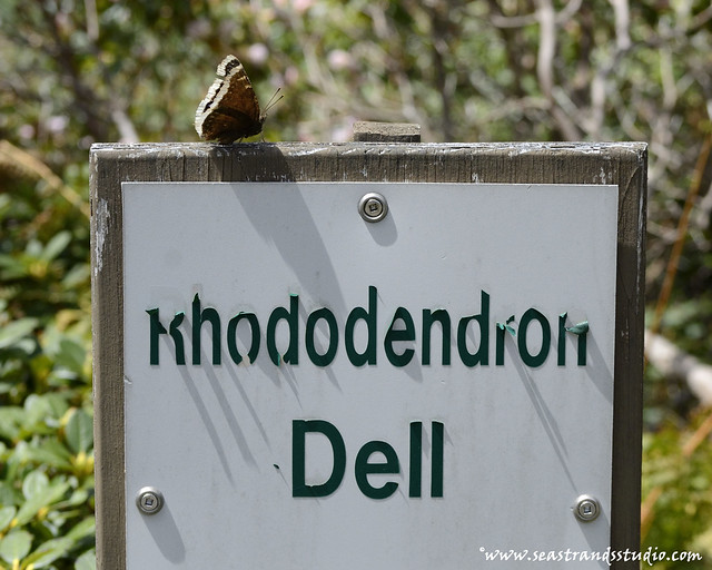 Rhododendron Dell