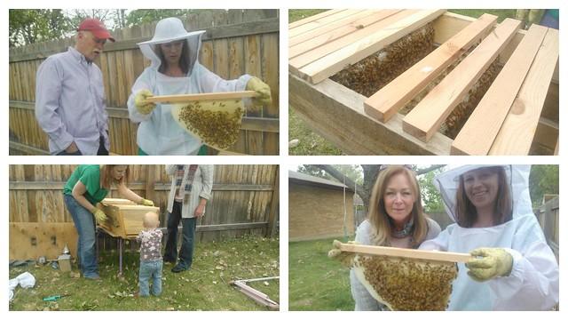 Hea's Bees