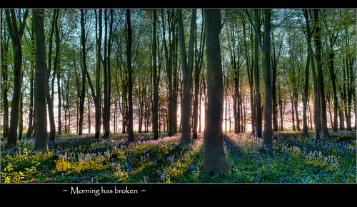 bluebells sunrise oxfordshire badbury badburyclump badburyhill