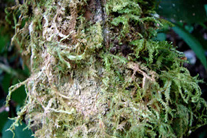 flora-fauna-catarata-chinata-amazonas