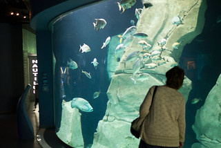 Meet the aquatic beasts at Istanbul Akvaryum - Things to do in Istanbul