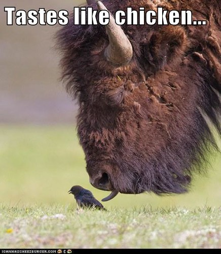 Tastes like chicken...