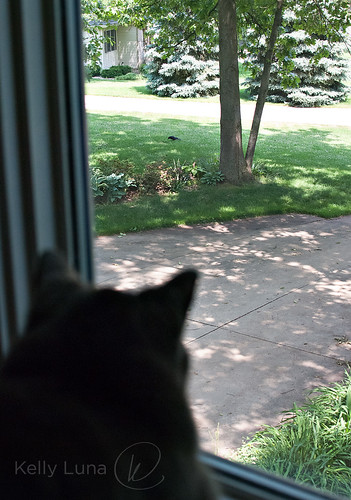 mal-birdwatching