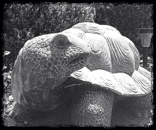 Static Turtle