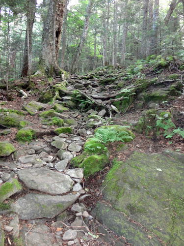 Glencliff Trail on Mt. Moosilauke