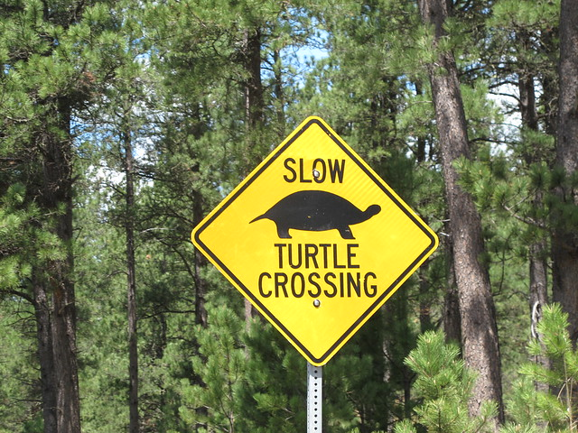 South Dakota Slow Turtle Crossing Flickr Photo Sharing