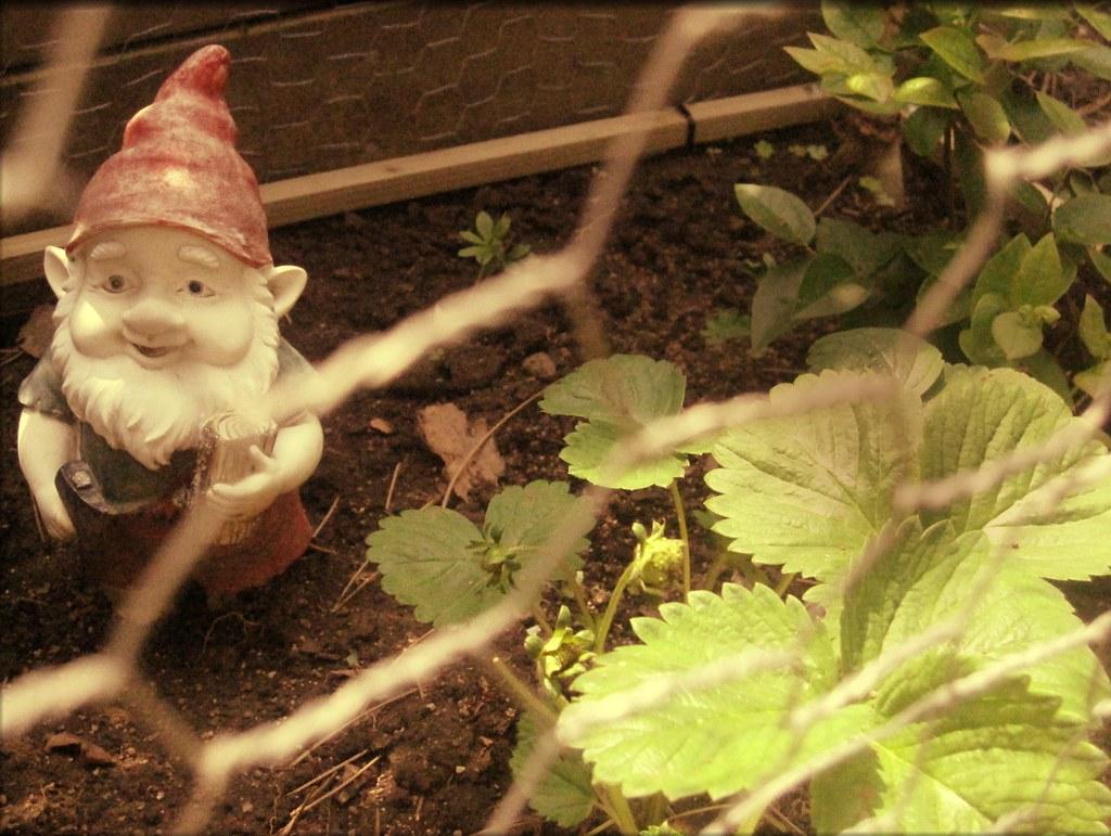 gnome on guard