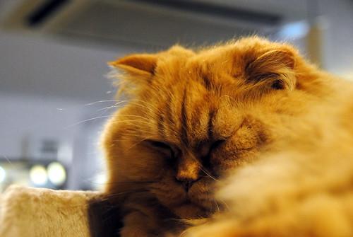Cat Street 007r