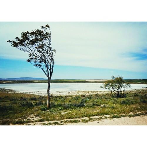 Laguna salada de Mediana #landscape #nature  #mediana #igerspain #igerszgz