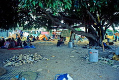Antiwar Encampment at Flamingo Park: 1972