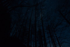 Midnight forestry silhouette