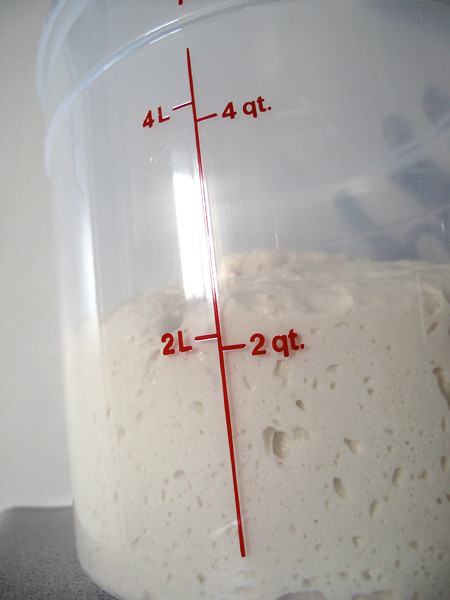 Bread Dough Rising