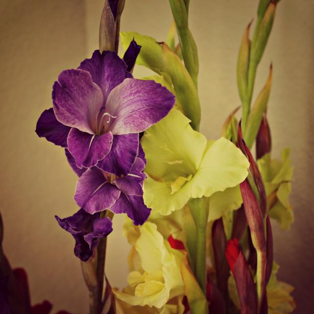 PurpleFlower.4.23.2012