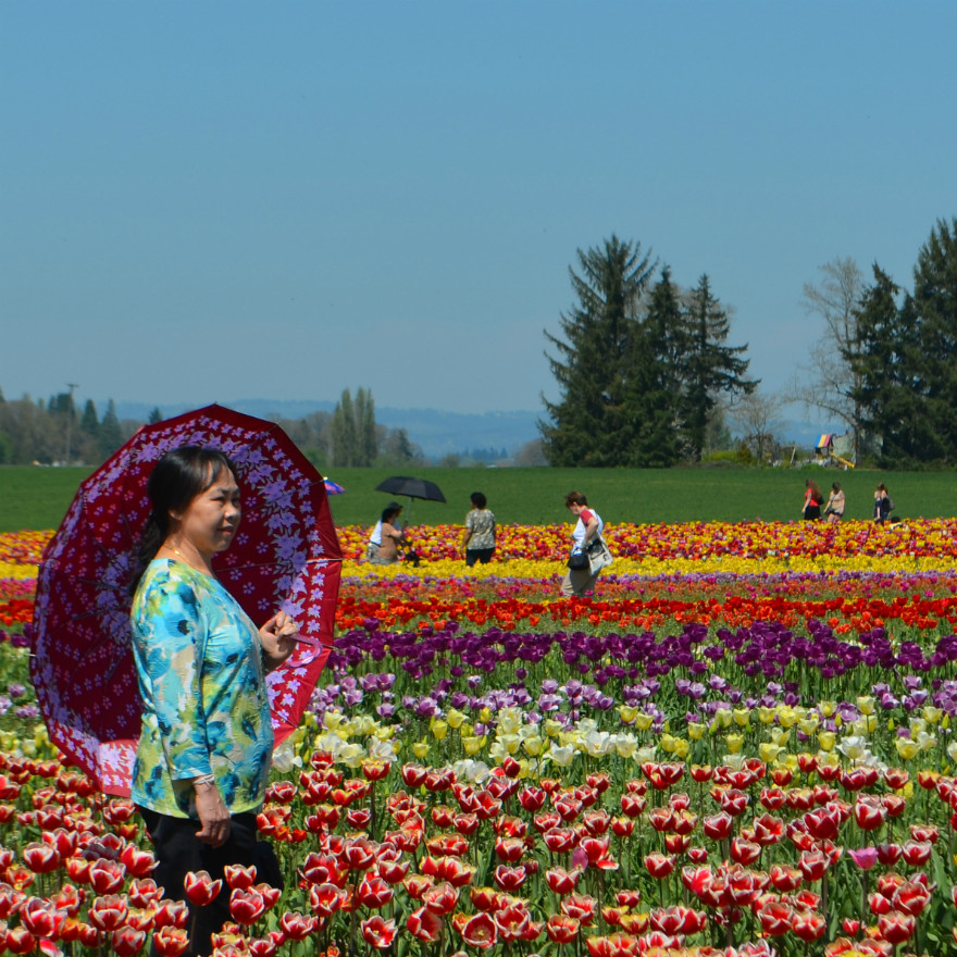 folks_tulips_lady_parasol_behind_her