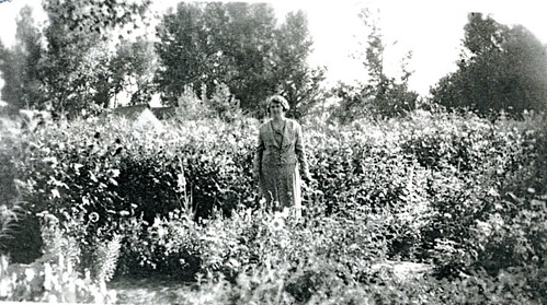 3457 Martha in flower garden
