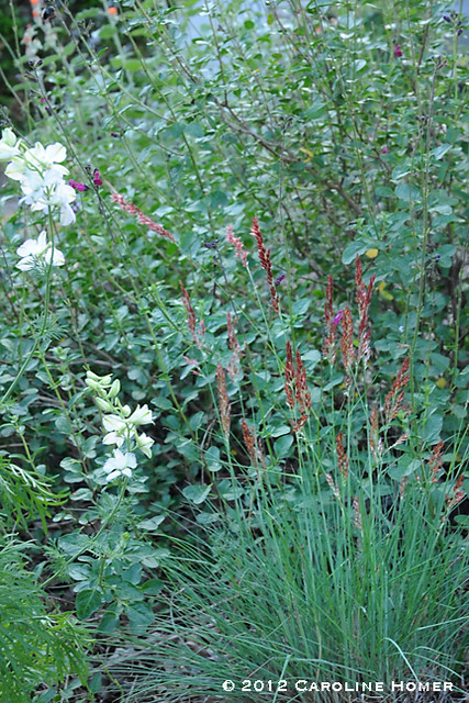 Globe mallow, salvia, 'Ruby Crystals' grass & larkspur