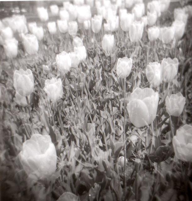Holga Flowers