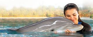 Nadar con delfines, una experiencia única.