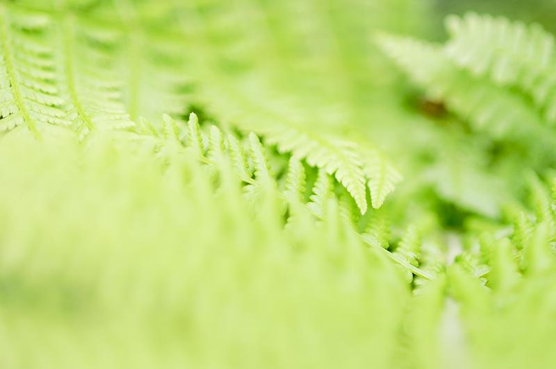 fern details
