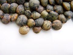 Puy Lentils (macro)