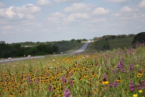 Gatesville (TX) United States Picture : Texas Roadside Wildflower Beauty