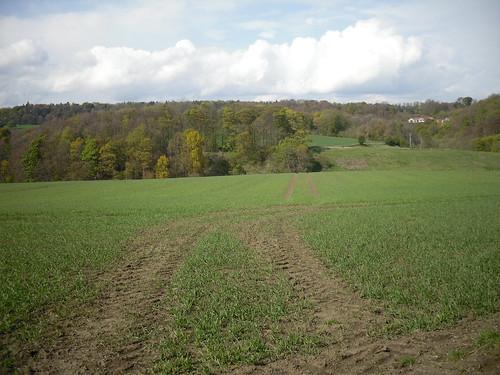 a field in Kirkcaldy