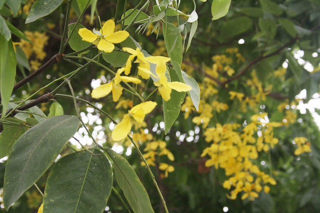 City Season – The Amaltas, Bungalow Road