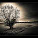 lonely tree... /Explore by Paul Lapinski