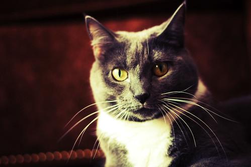 [フリー画像素材] 動物 1, 猫・ネコ ID:201205241600