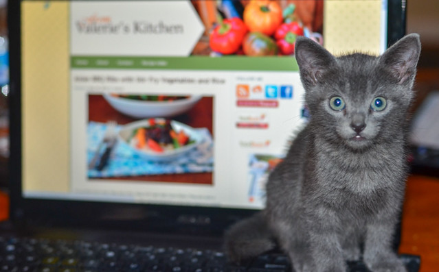 A small grey kitten with green eyes sitting on a laptop.