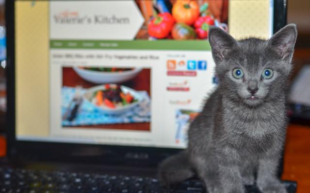 Kittens-005.jpg
