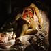 """Clemente Susini's """"Venerina"""" anatomical wax model, Palazzo Poggi"""