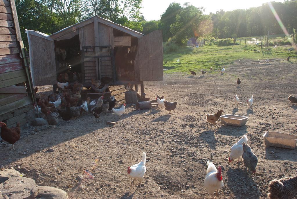 farm_13