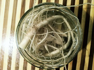 Foraged Ingredients: Infusing Vodka with Garlic Mustard Root Garlic Mustard