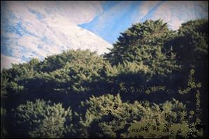 bosque-intimpa-santuario-nacional-ampay