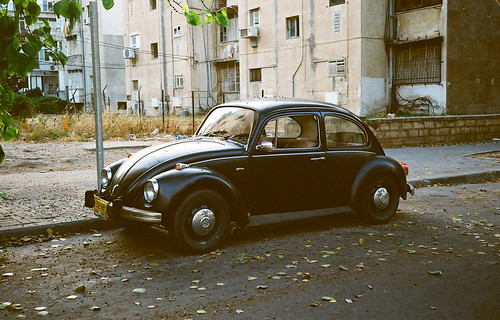 Beetle in its natural habitat.