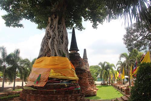temple-tree2