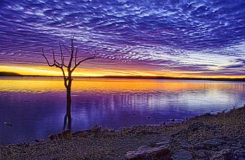 無料写真素材, 自然風景, 河川・湖, 樹木, 朝焼け・夕焼け, 風景  アメリカ合衆国