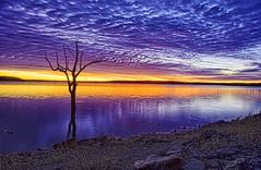 [フリー画像素材] 自然風景, 河川・湖, 樹木, 朝焼け・夕焼け, 風景 - アメリカ合衆国 ID:201206102000